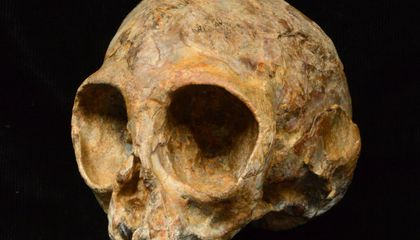 Is This Baby Animal the Last Common Ancestor of Humans and Apes?