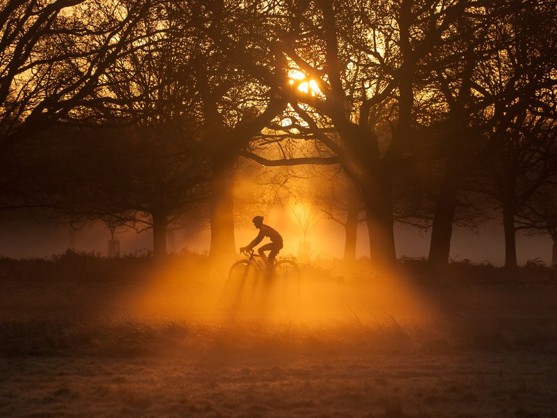 Richmond Park is famous of its beautiful trees and free living red deers. No wonder that it is also a favourite place for cyclists. The photo was taken at sunrise.