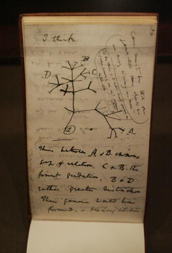 Math Essay Topics Charles Darwin Drew A Tree Of Life But Didnt Focus On How Species  Multiply William Perlman  Star Ledger  Corbis Essay Noise Pollution also Profile Essay What Darwin Didnt Know  Science  Smithsonian Interesting Persuasive Essay Topics For High School Students