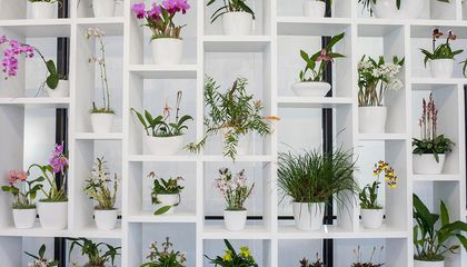 Why Orchids Belong in an Art Museum