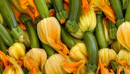 Food of the Moment: Squash Blossoms