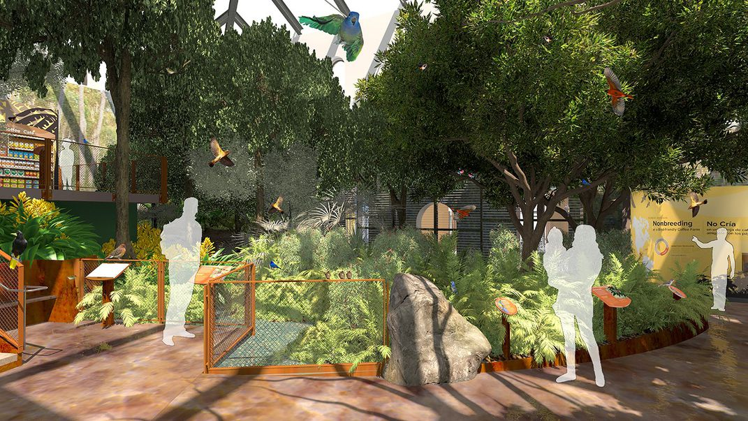 An illustrated design of a Bird House exhibit aviary with leafy trees, shrubs and plants, a pathway for visitors and tropical birds in flight or perched on branches.
