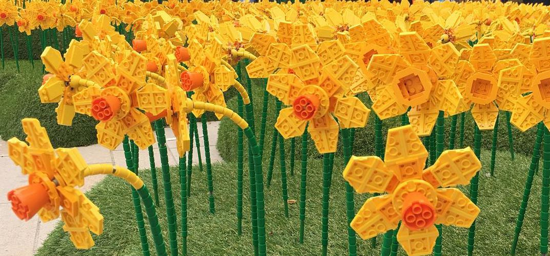 Caption: Thousands of Lego Daffodils Are Blooming in Britain