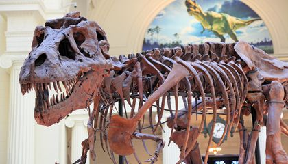 Preserve and Protect: How Paleontologists Care for Their Long-Dead, High-Maintenance Stars