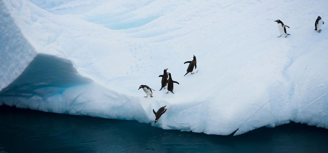 Penguins on the ice