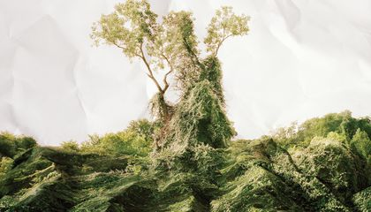 The True Story of Kudzu, the Vine That Never Truly Ate the South