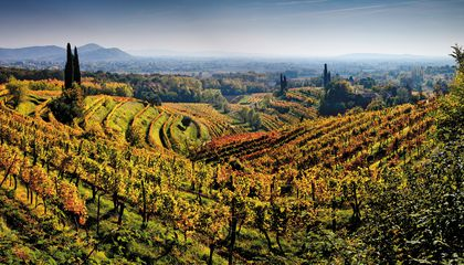 The Best Italian Wine Region You've Never Heard Of