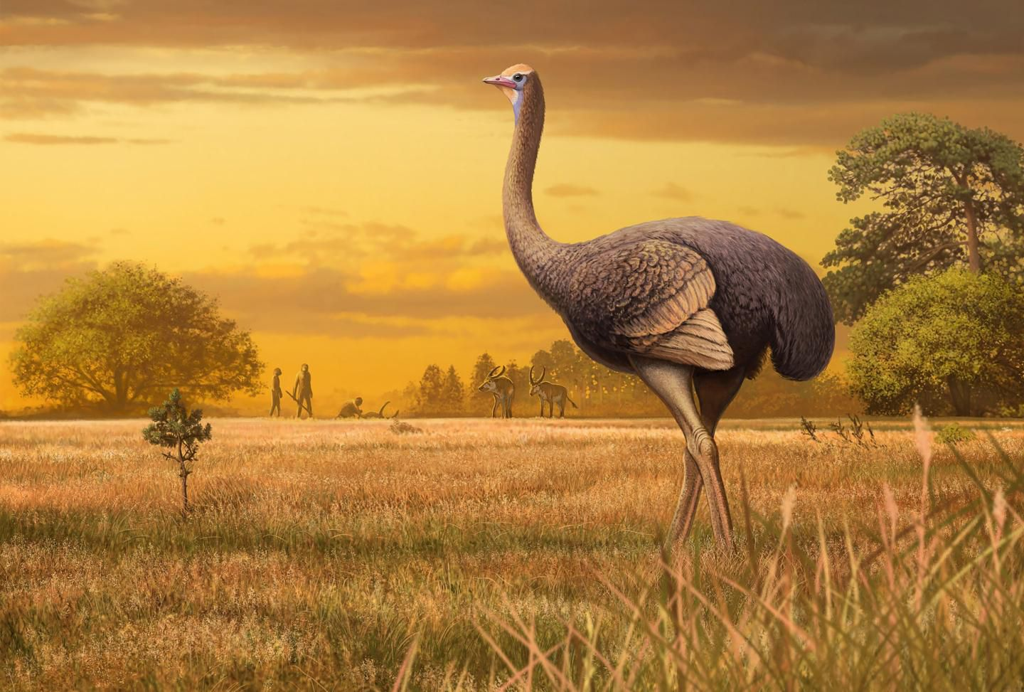 Fossil of Ancient Bird Three Times Bigger Than an Ostrich