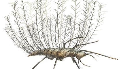 Some Ancient Insects Wore the Exoskeletons of Other Bugs to Disguise Themselves