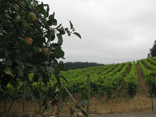 California's Disappearing Apple Orchards | Travel | Smithsonian