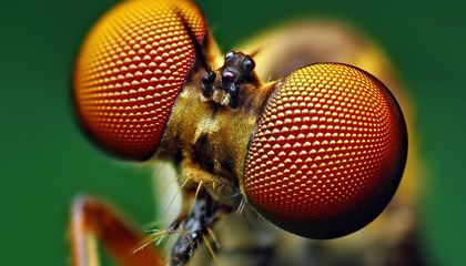 These New Solar Cells Are Modeled After a Fly's Eye