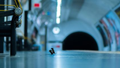 See Squabbling Subway Mice and Other Top Wildlife Photos