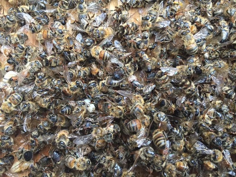 Dead Bees 2