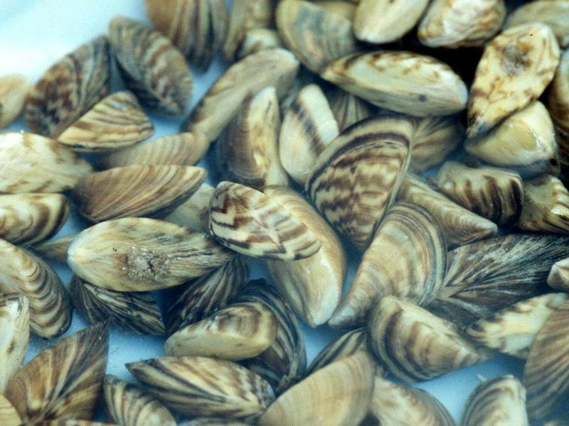 Mussels' Sticky Threads Could Inspire Ways to Clean Up Oil Spills, Purify Water and More