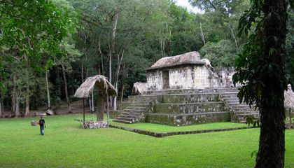Dogs Were Transported Across Great Distances for Ancient Maya Rituals