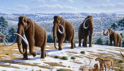 Neanderthal Hunters Probably Didn't Herd Mammoths Off Cliffs