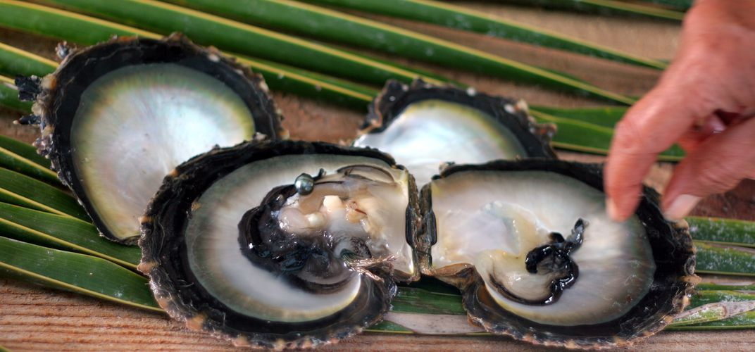 Oysters with black pearl, found in Fakarava, Tuamotu Islands