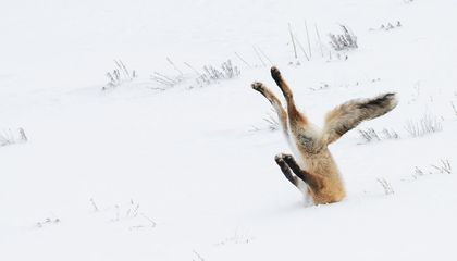 Forget Nature's Majesty. These Photos Show Wildlife's Goofy Side