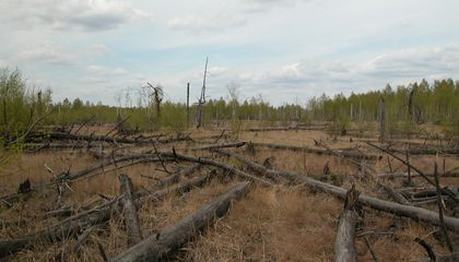 Forests Around Chernobyl Aren't Decaying Properly
