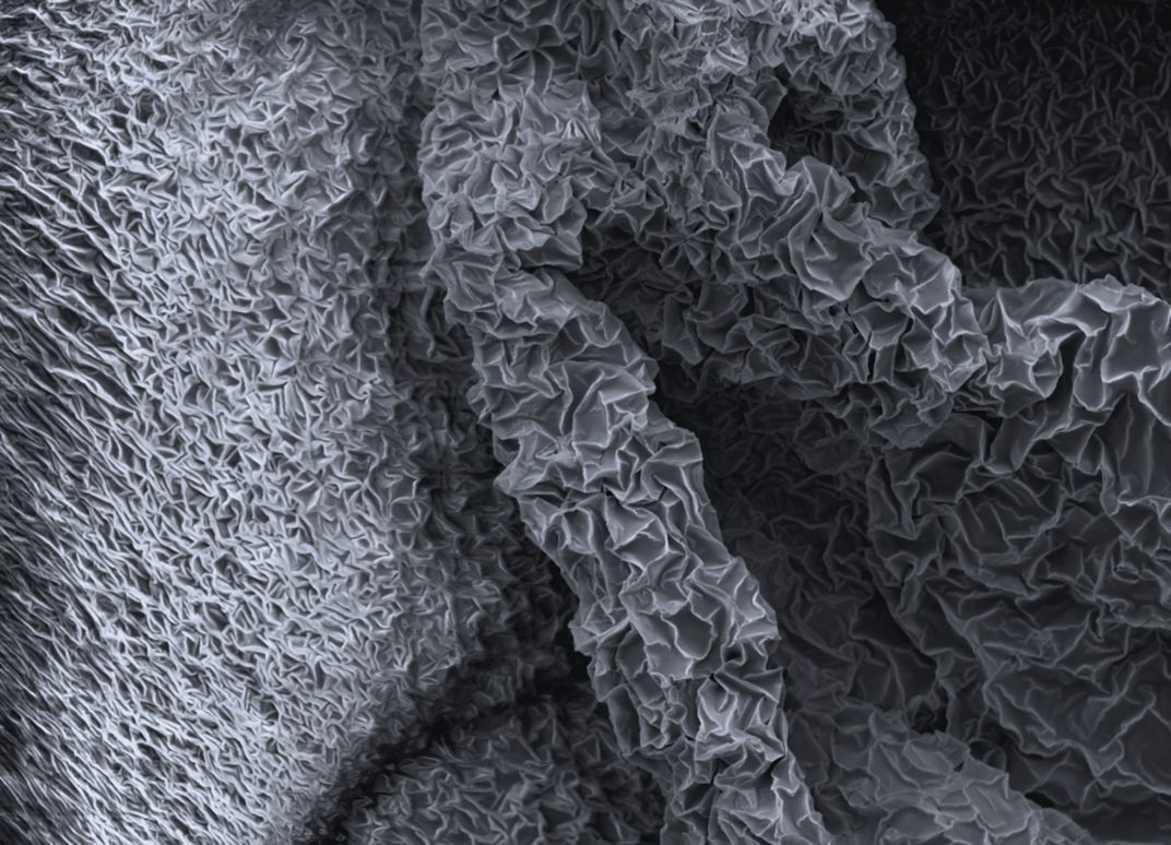 Electron Microscope Photograph of Sticky Tape   Smithsonian