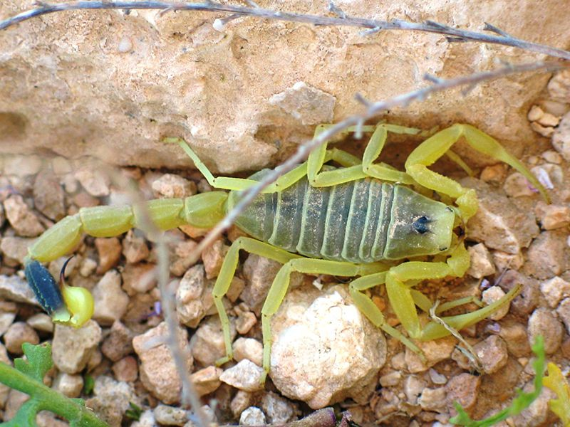 How Scorpion Venom Is Helping Doctors Treat Cancer