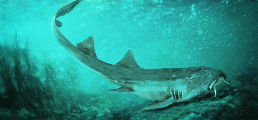 Caption: Shark Species Discovered Alongside Sue the T. Rex