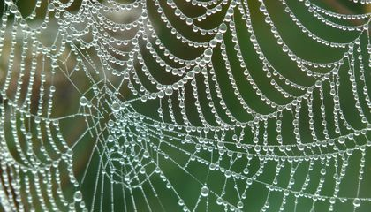 New Artificial Spider Silk: Stronger Than Steel and 98 Percent Water