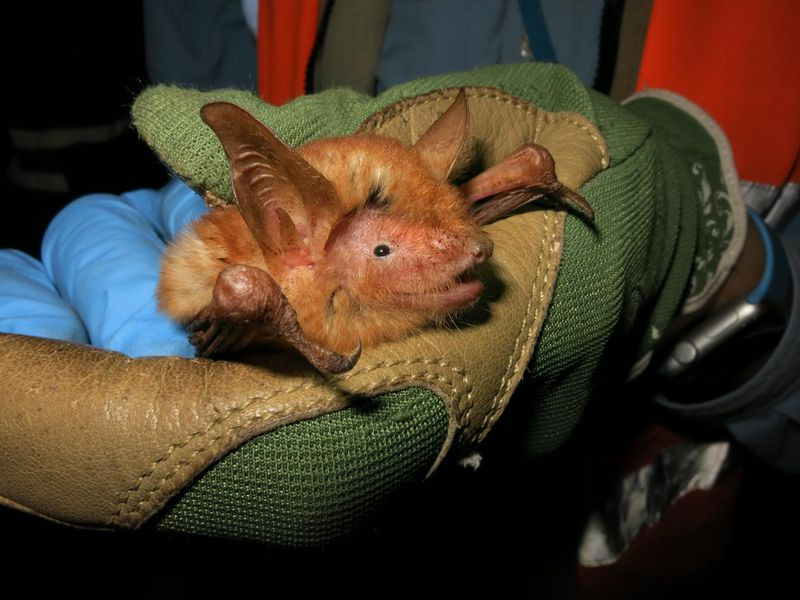 Close-up on an orange bat held by a person wearing a green glove