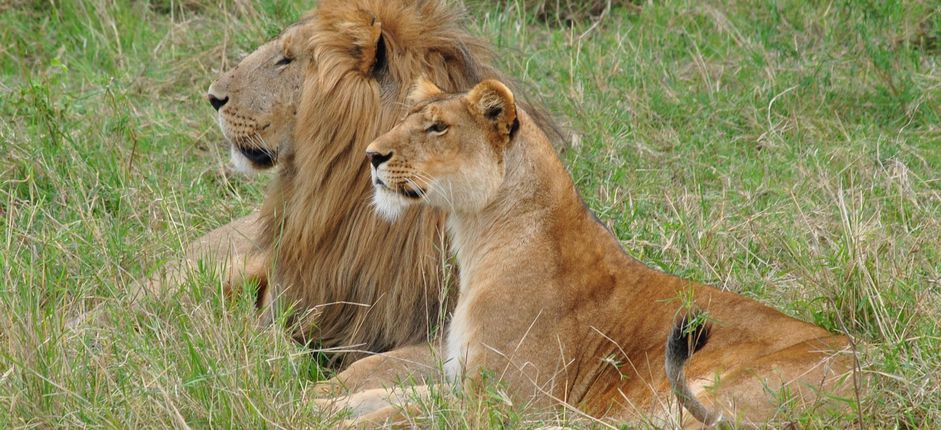 Tailor-Made Travel to Tanzania <p>Search for the &quot;Big Five&quot; on this Tailor-Made Journey to Tanzania!</p>
