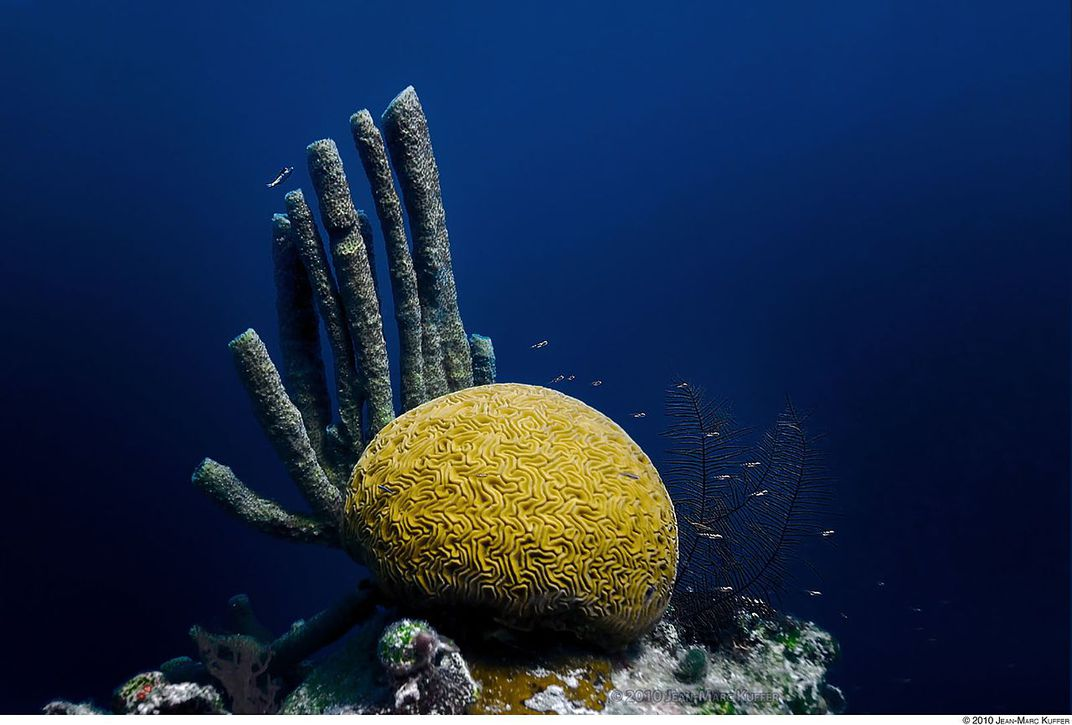 How The Belize Barrier Reef Beat The Endangered List Smart