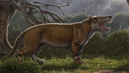 This Toothy Carnivore Was Bigger Than a Polar Bear