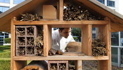 Forget the Hive, Now Wild Bees Can Check in to These Swanky Hotels