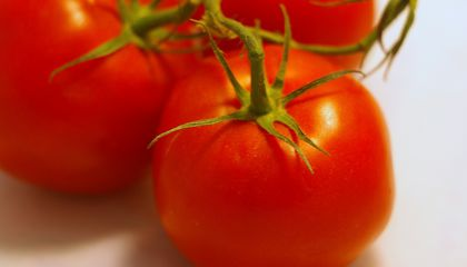 Geneticists Think They Can Fix Tasteless Tomatoes
