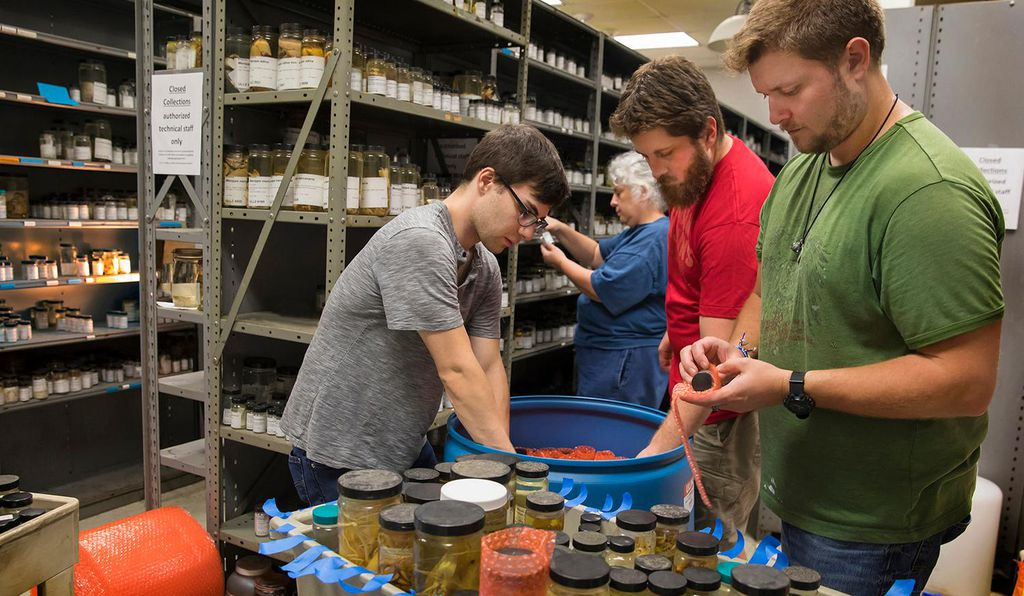 Technicians from Smithsonian Institute pack the 100,000 specimens into 18,000 containers to be transported to the Natural History Museum in Washington, D.C.