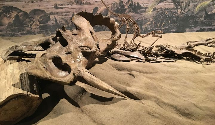 Dinosaurs Suffered From Cancer, Too