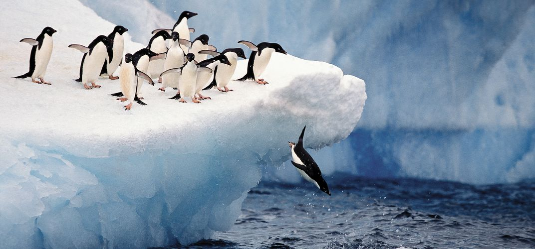 Adélie penguins in Antarctica