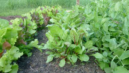 Life, Death and Unnatural Acts in the Vegetable Garden