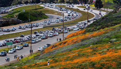Superbloom Turns Southern California City Into a #Poppynightmare