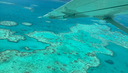The Great Barrier Reef Is Now Facing Most Widespread Bleaching Event Yet