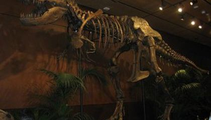 Dino Blog Carnival #12 - Disappearing Mayans, Academic Snubbing, Vacationing Paleontologists and Skeleton for Sale