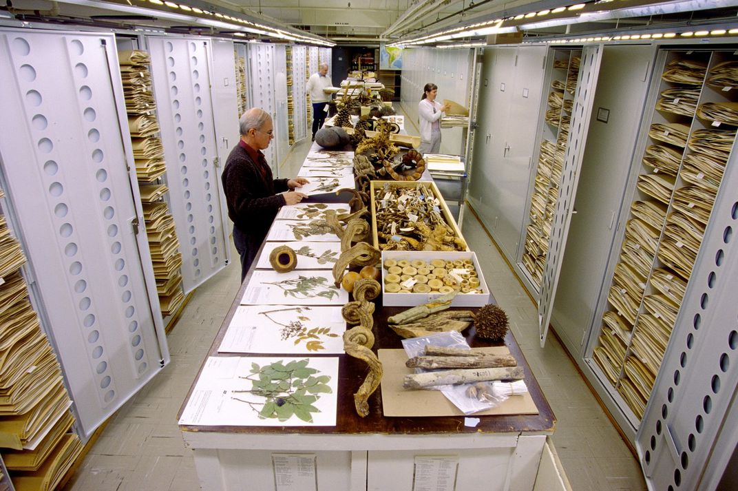 Three people working in stacks containing pressed plants