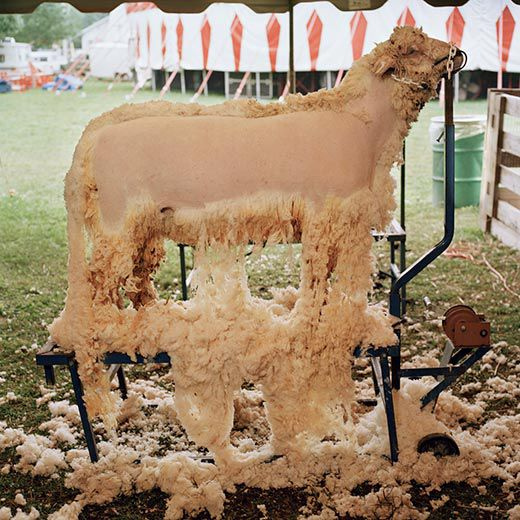 Schoharie County Sunshine Fair 2003