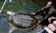 Beloved Giant Turtle Dies, Leaving Only Three Alive on Earth