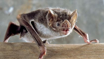 What a Vampire Bat Can Teach Us About the Economics of Friendship