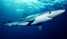 Scientists Search for the Most Dangerous Places to Be a Shark