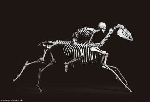 evolution, a book that turns science into art | science | smithsonian, Skeleton