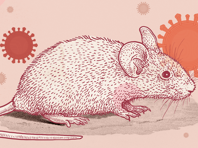 Illustration of a mouse with coronaviruses in the background