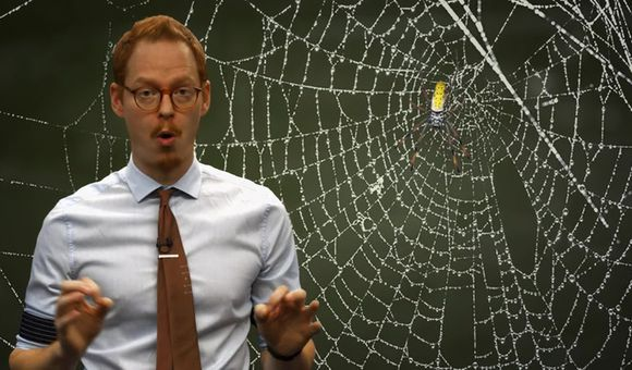 Preview thumbnail for video'TweenTribune: How Do Spiders Make Their Webs?