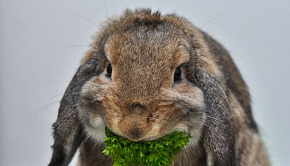 """Rabbit: The Other """"Other White Meat"""""""