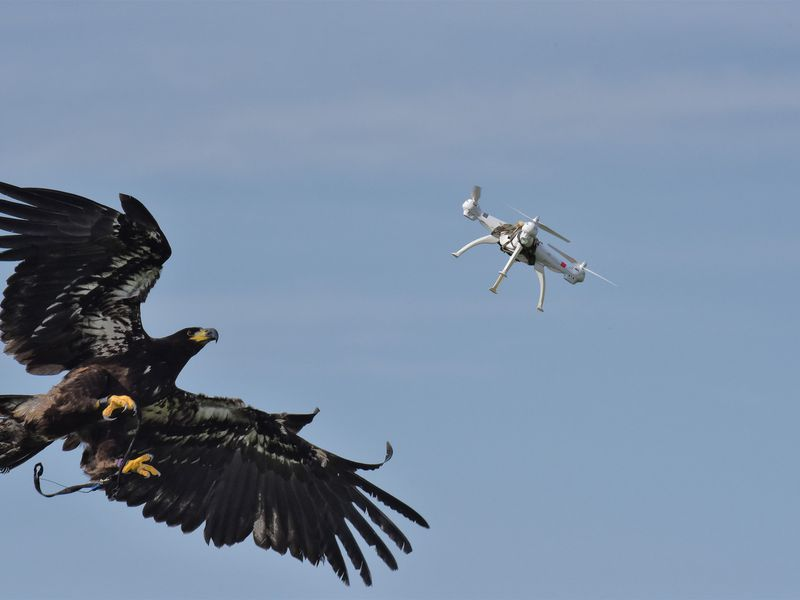 Attack of the Drone-Snatching Eagles | Daily Planet | Air & Space ...